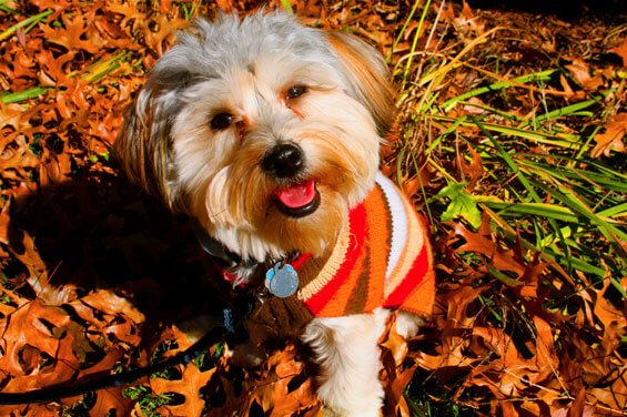 henry-rockin-the-fall-sweater