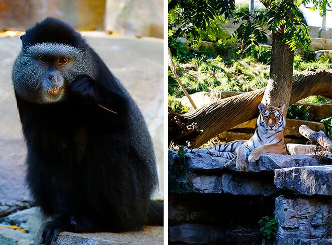 Omaha Zoo 5