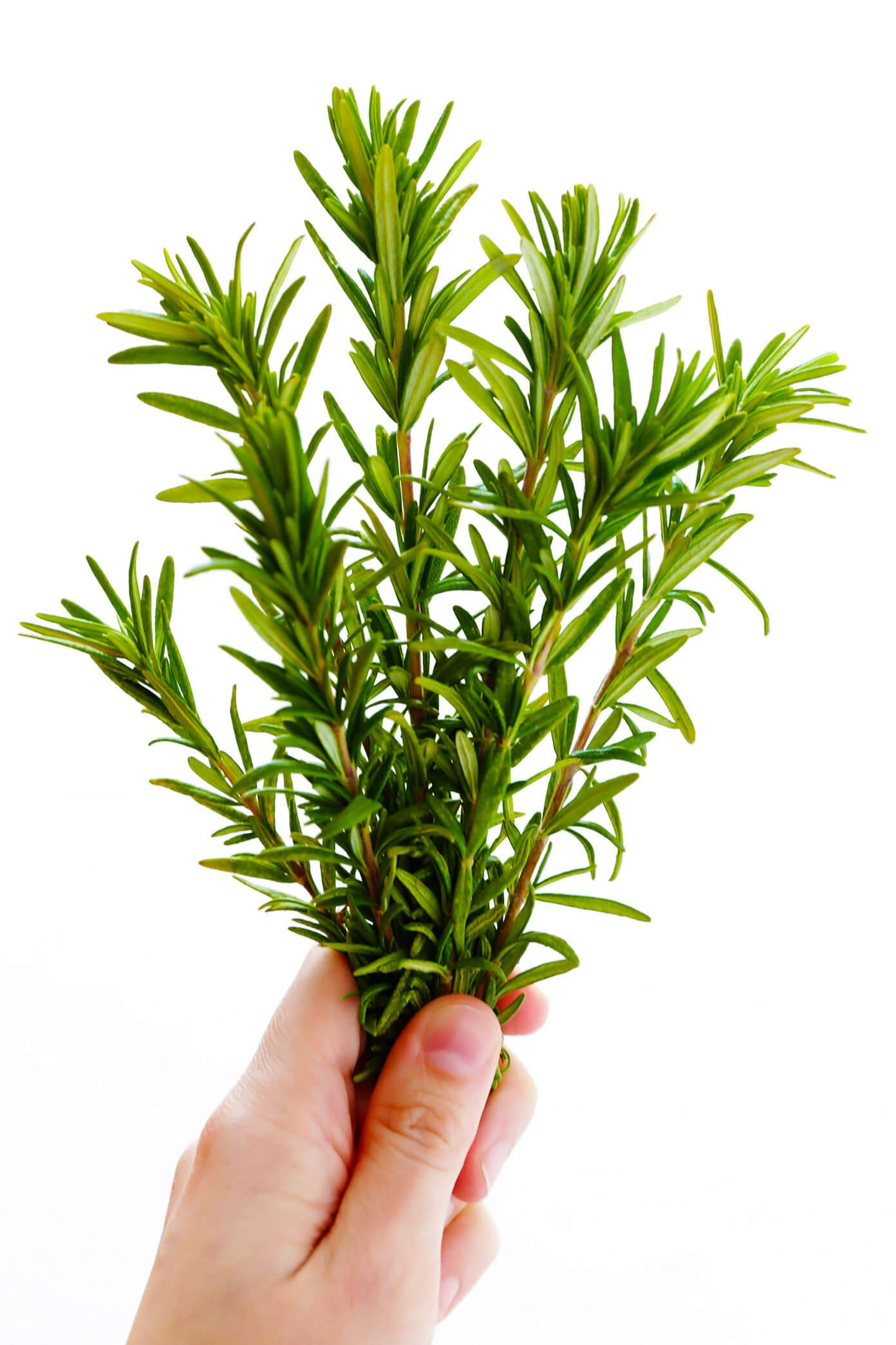 Fresh Rosemary for Focaccia Bread