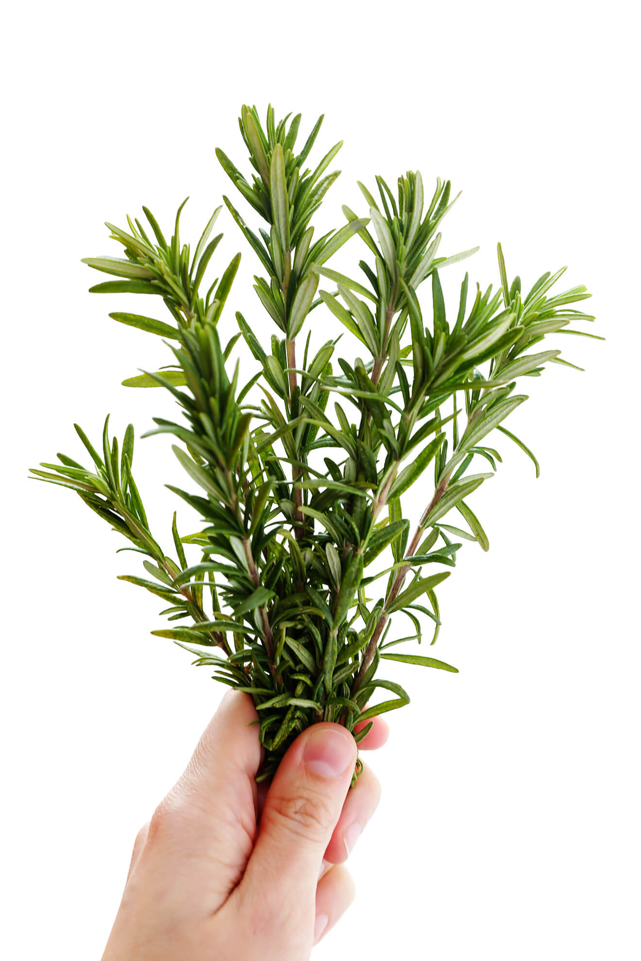 Fresh rosemary is the starring ingredient in this delicious focaccia recipe! | gimmesomeoven.com