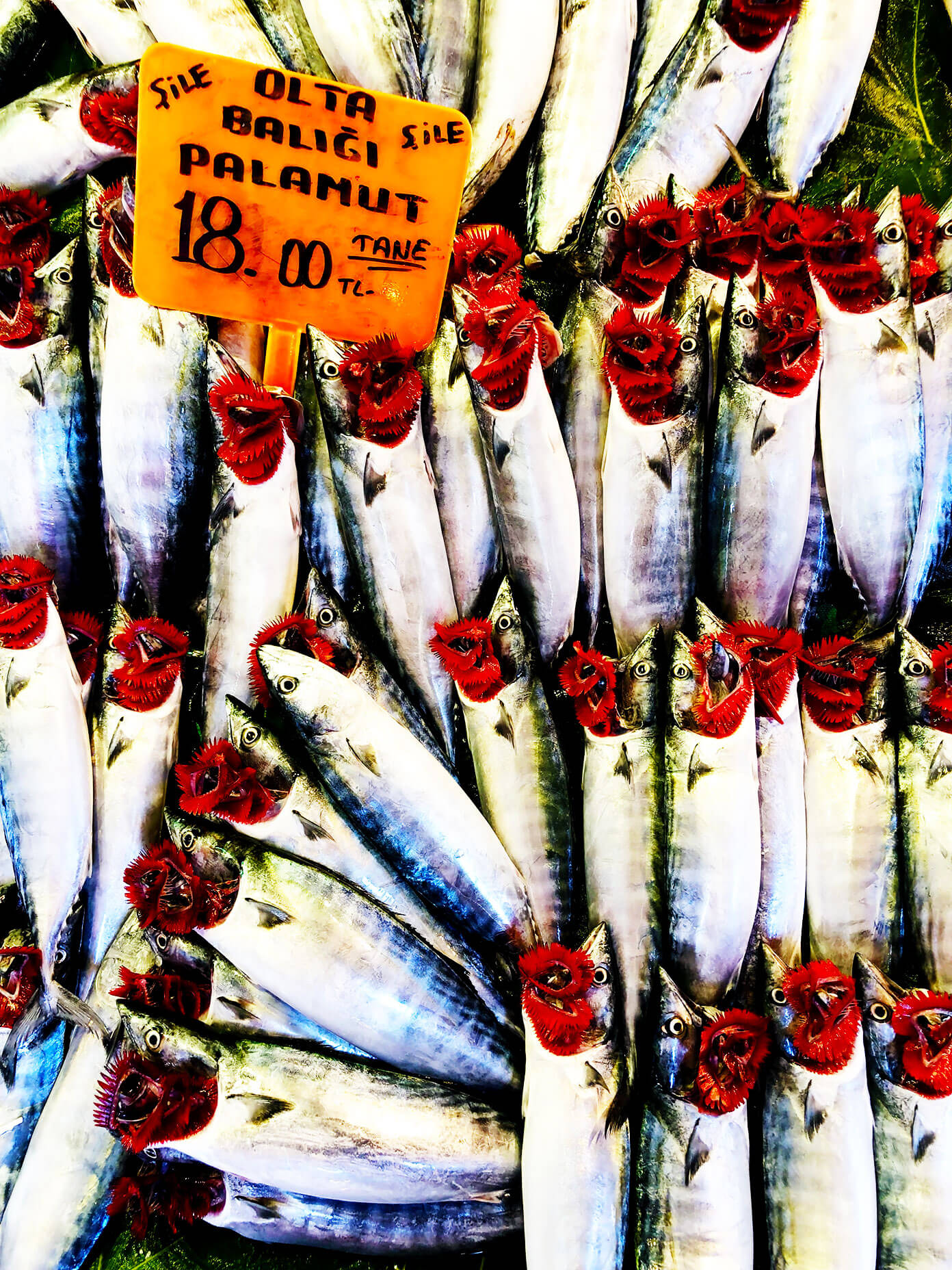 Istanbul Fish Markets