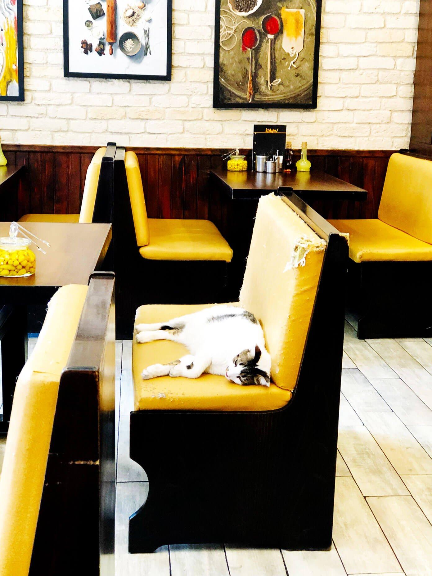Cat Nap in Istanbul