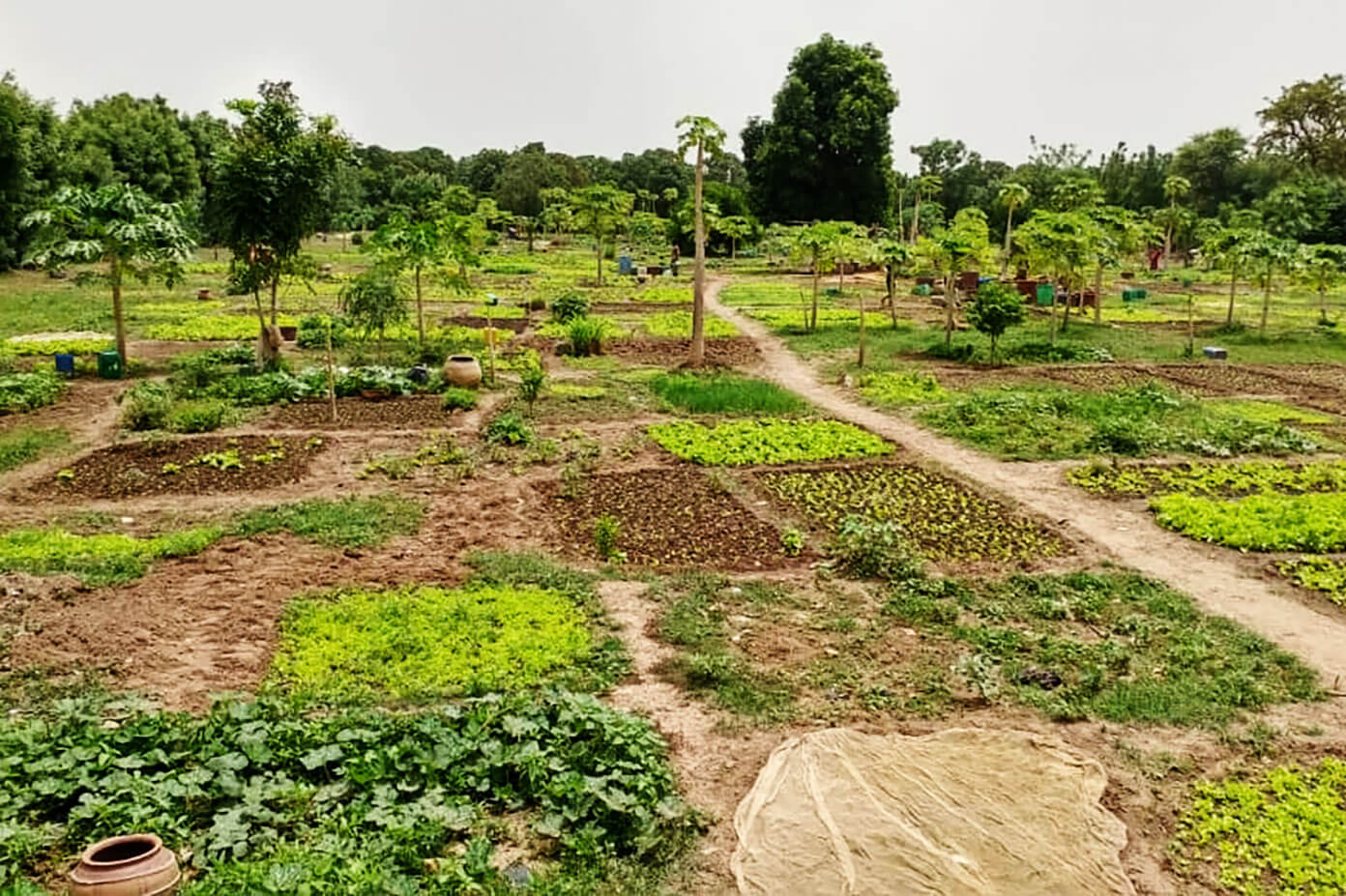 Community Garden In Mali