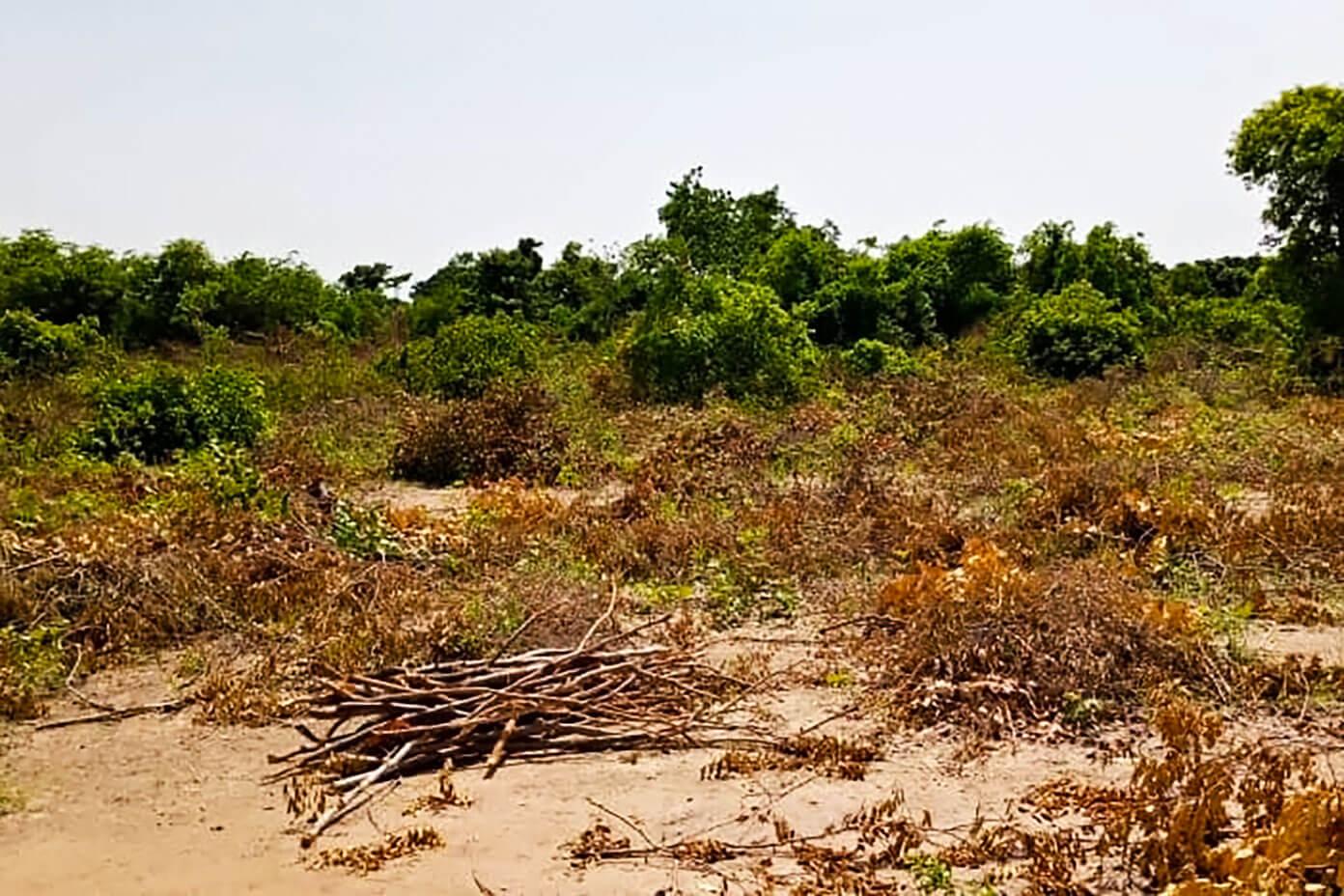 Brush land in Mali