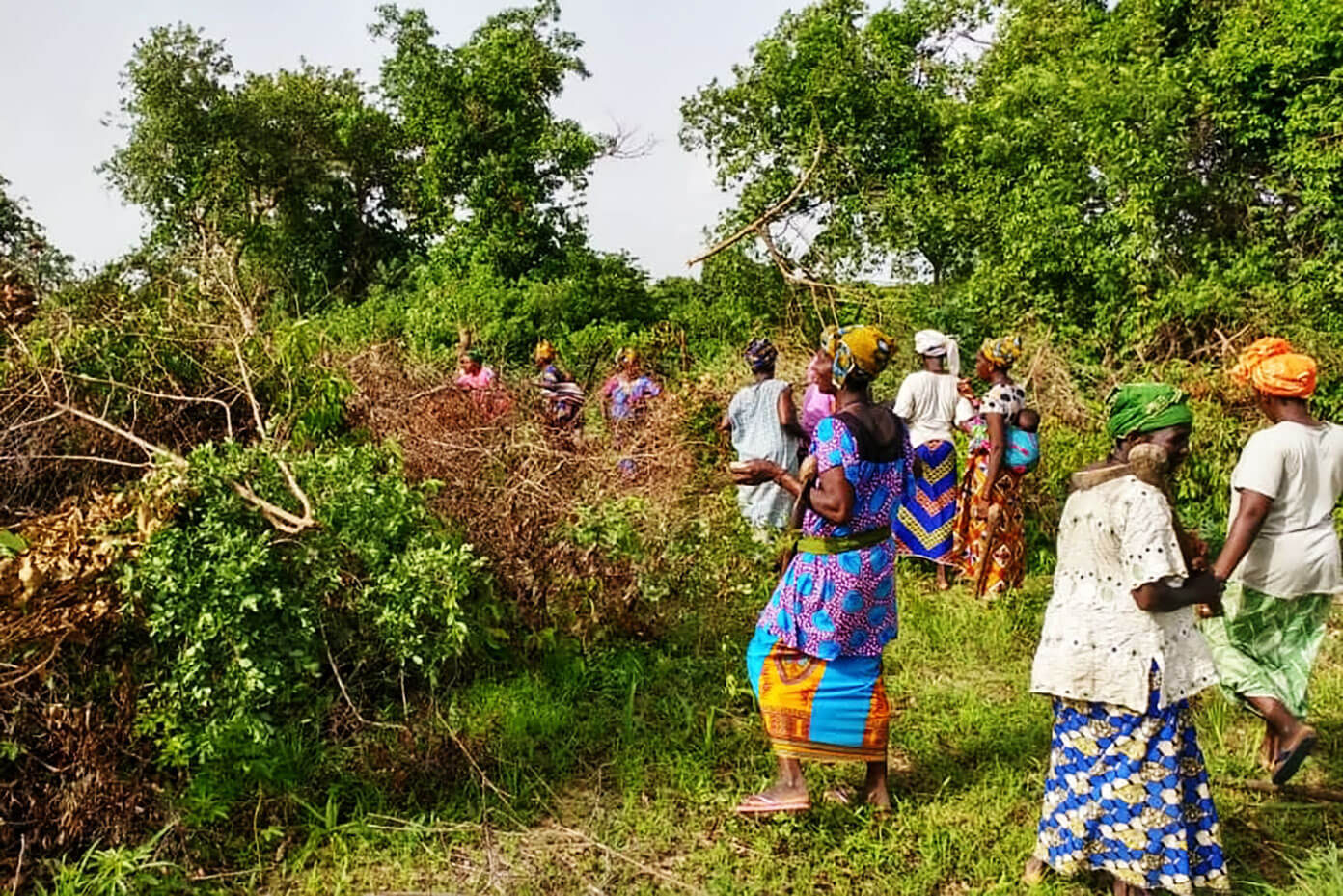 Clearing the brush to make a community garden in Mali