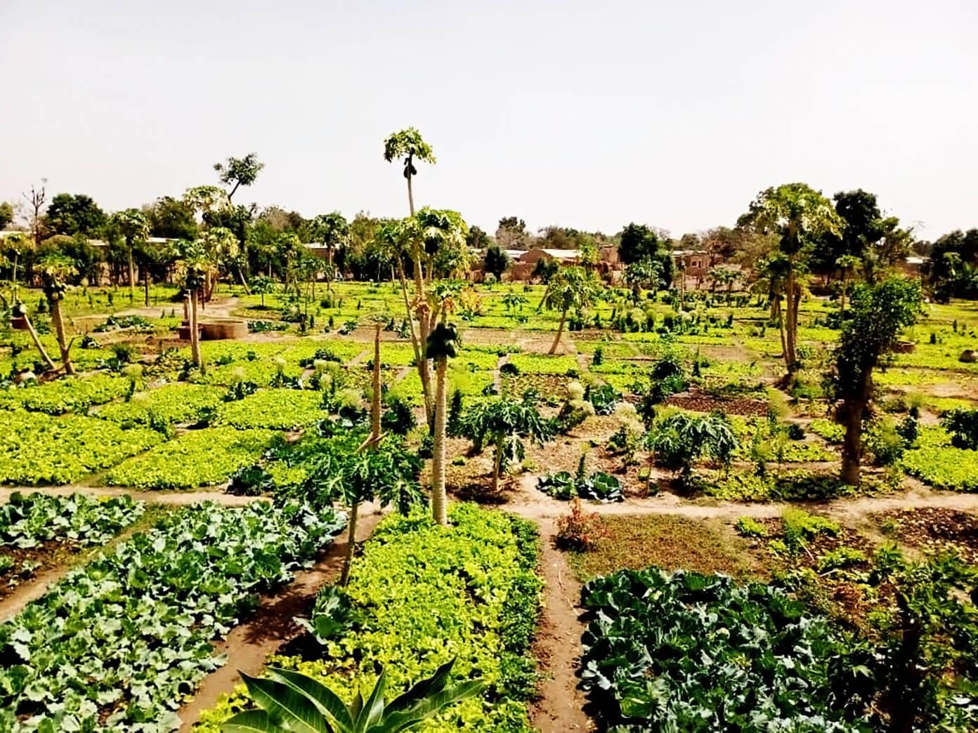The Wash Project Benkadi Garden in Mali