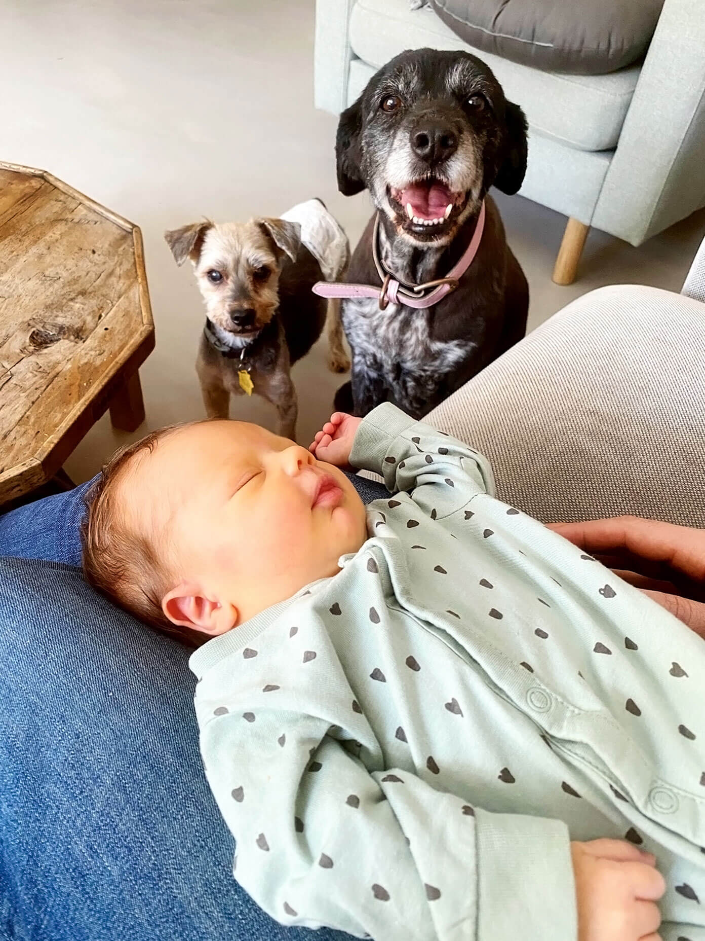 Teo Meeting The Pups