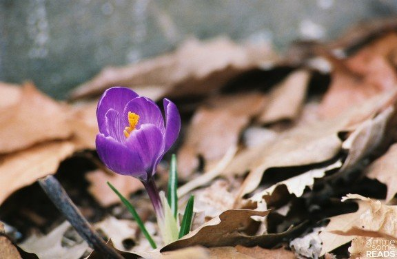 crocus: the strength of spring in such a delicate form | Kansas City, KS 2008