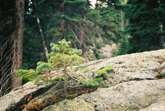 out of the rock, a tree   Estes Park, CO 2008