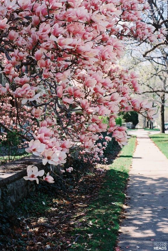 magnolia path | gimmesomereads.com