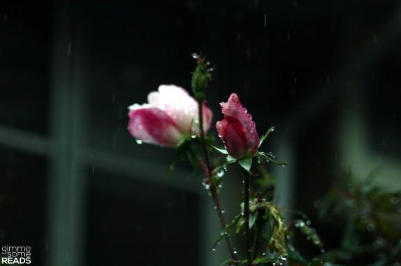raindrops on roses | gimmesomereads.com