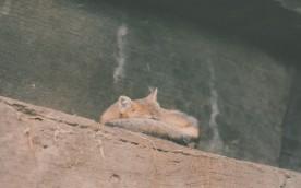 Zoo! | www.gimmesomestyleblog.com